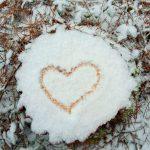 arbres neige blanc bois forêt bretagne cœur