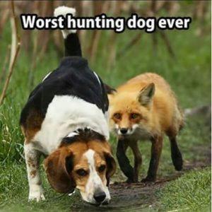 worst Hunting dog-crystal clean carpets joplin mo