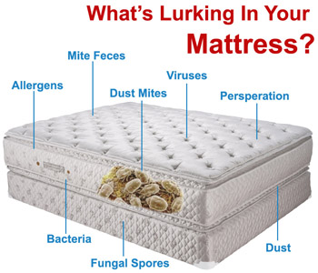 Mattress Cleaning Ottawa Service Do You Know Who Are In Bed With