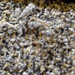 carpet sprouting