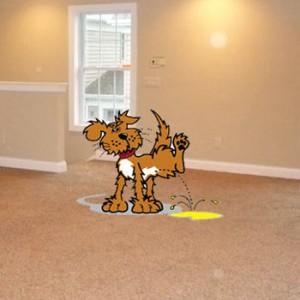 dog pet urine in carpet
