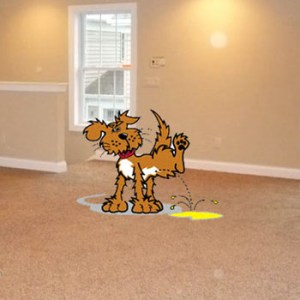 dog pet urine  in carpet