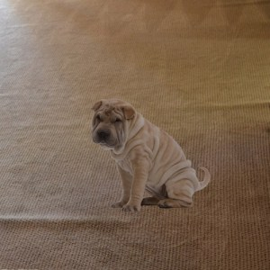 carpet wrinkles