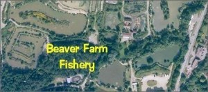 Beaver Farm Fishery