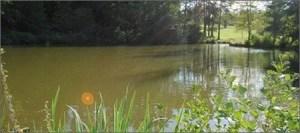 Trelough Pool