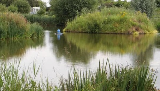 The Sedges Fishery