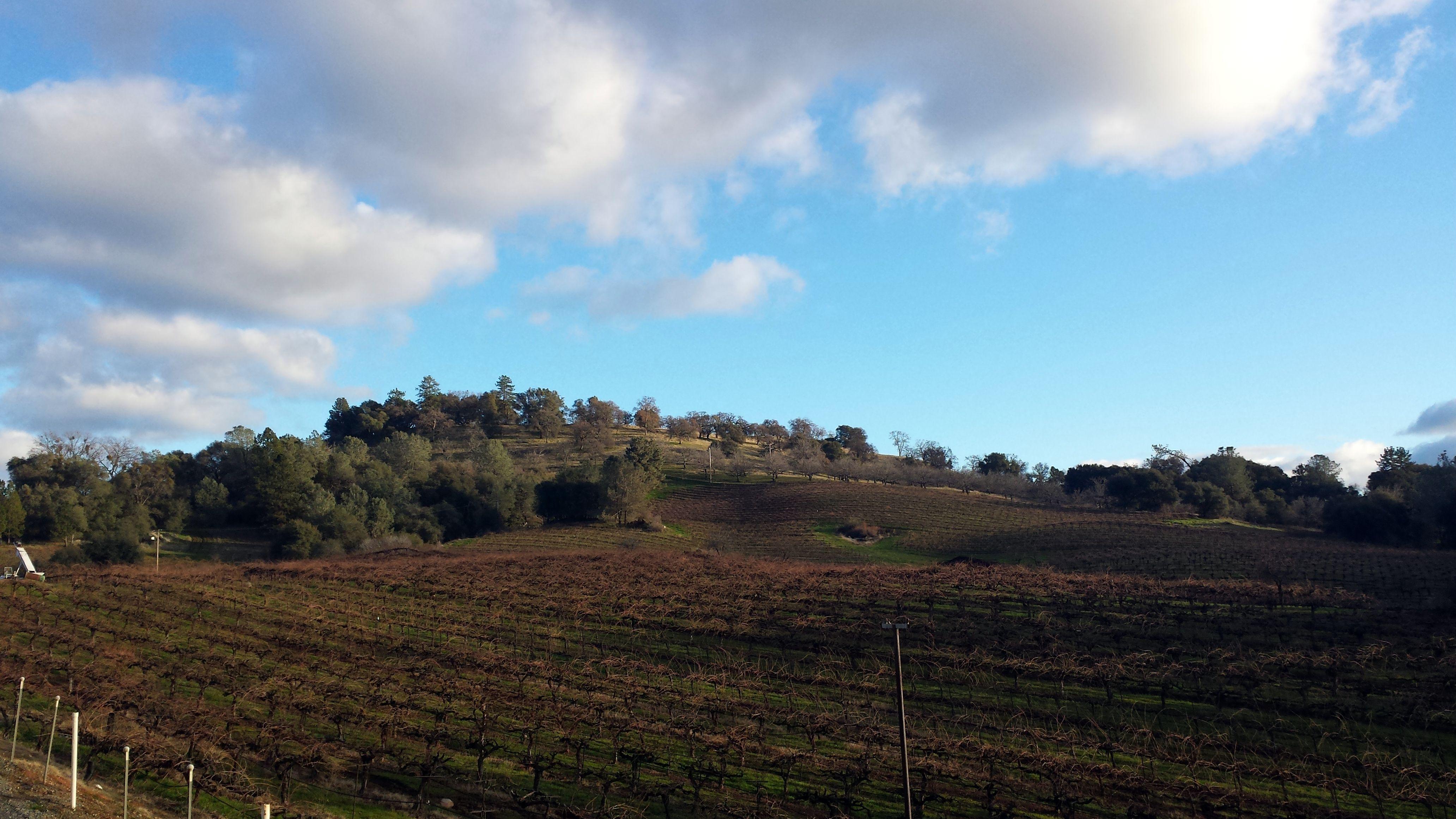 Shenandoah Valley Vineyard