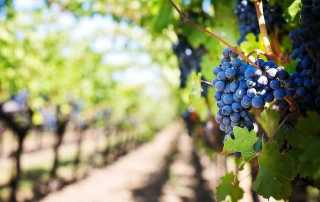 melbourne-vineyard-tours