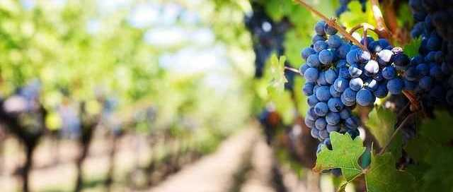 melbourne-vineyard-tours