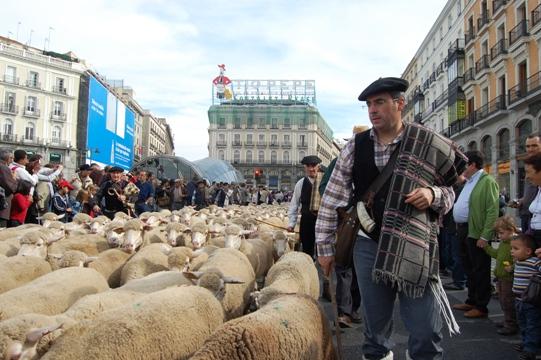 Transhumancia en Madrid