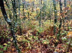 rebollar de otoño cercedilla