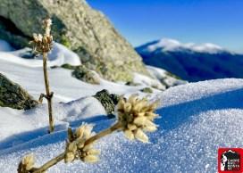 monton de trigo invernal galeria (1) (Copy)