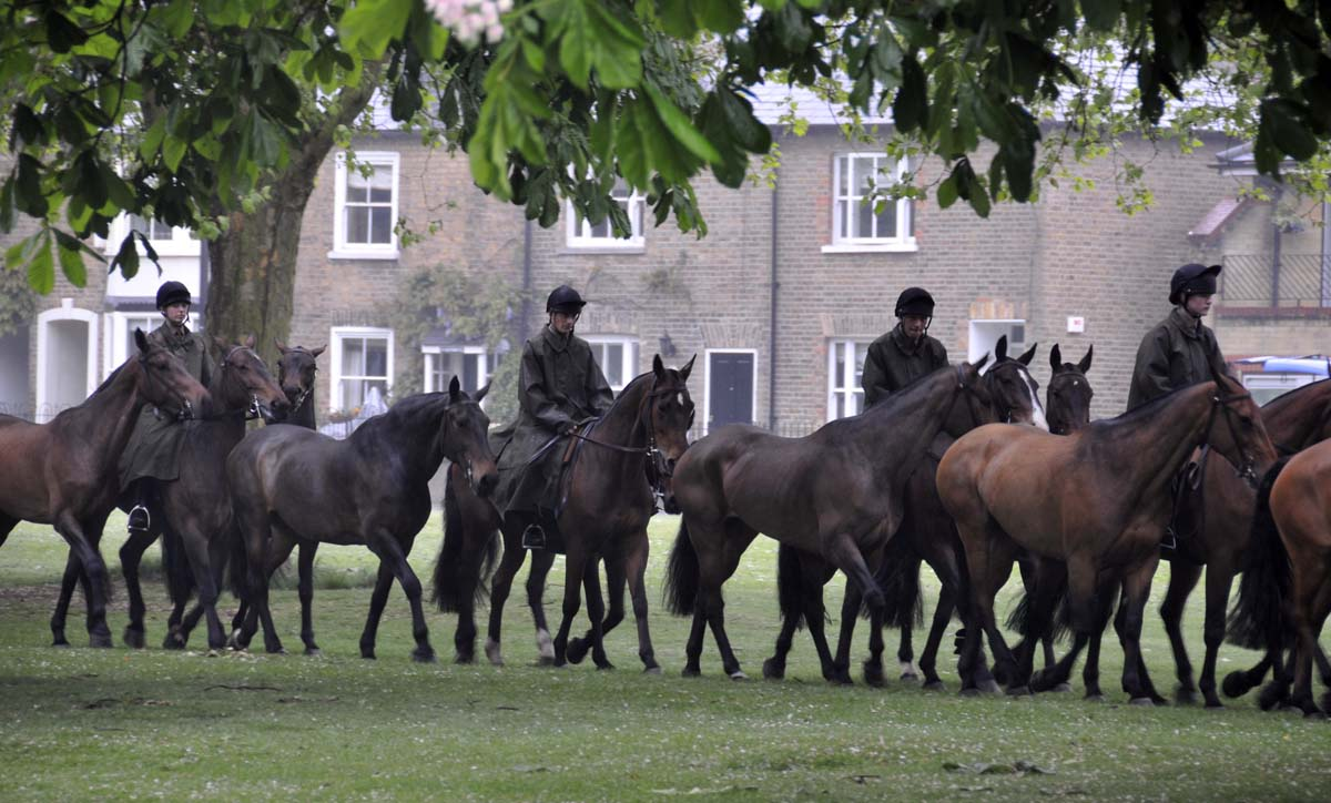 another section of the long line of King's Troop horses, walking on the grass beside the Long Walk