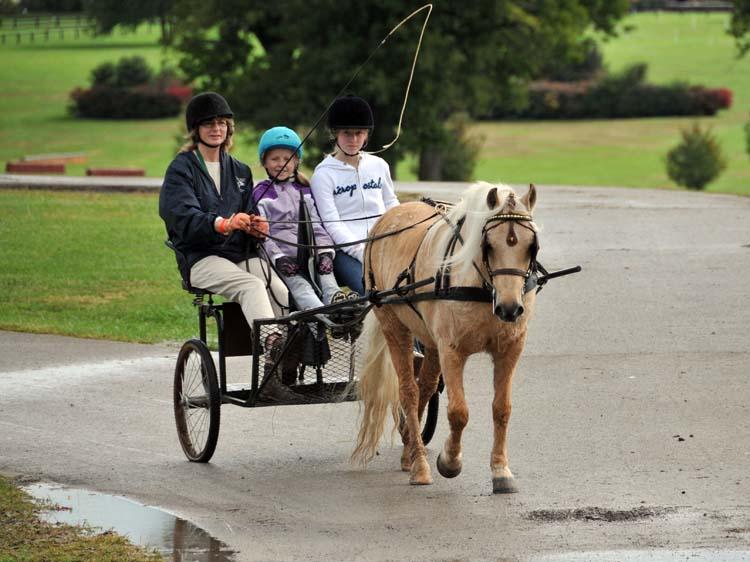 enjoying the Horse Park between rain storms (1) ...