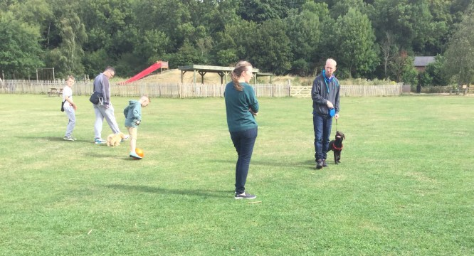 puppy trainng