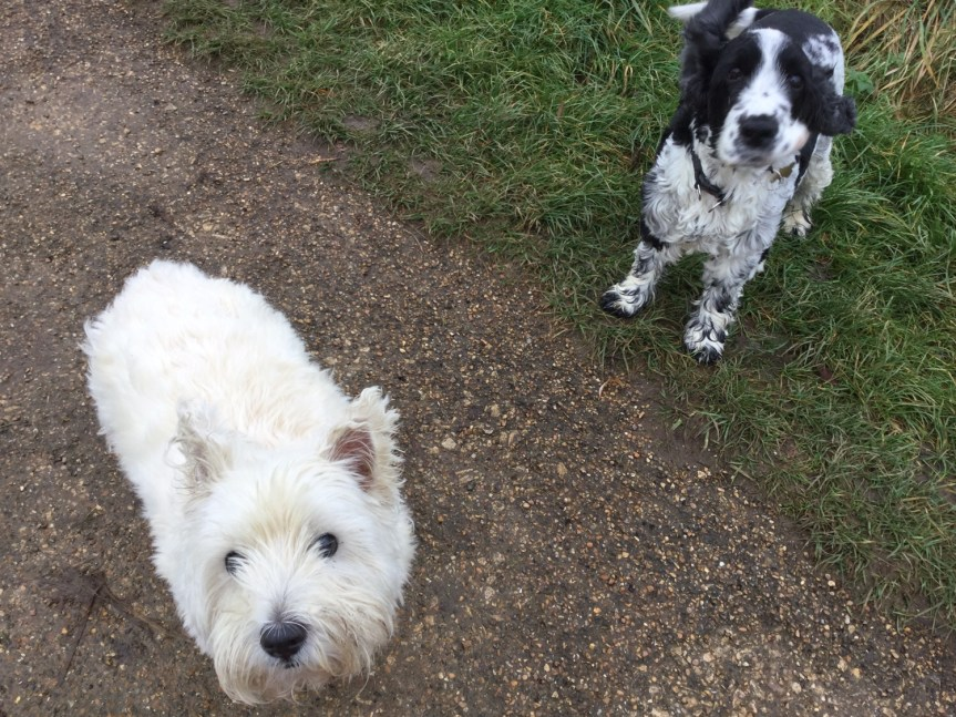 Dog socialisation Huntingdon