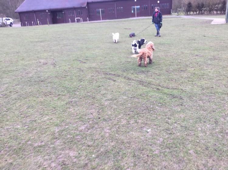 Dog classes Cambridgeshire