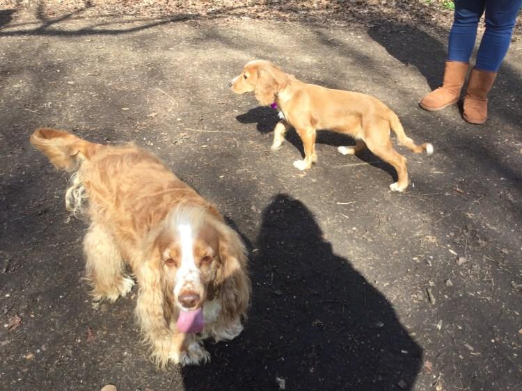 Dog group walks Cambridgeshire
