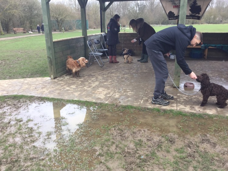 Dog classes Cambridgeshire