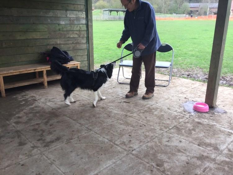 Advanced dog classes Cambridgeshire