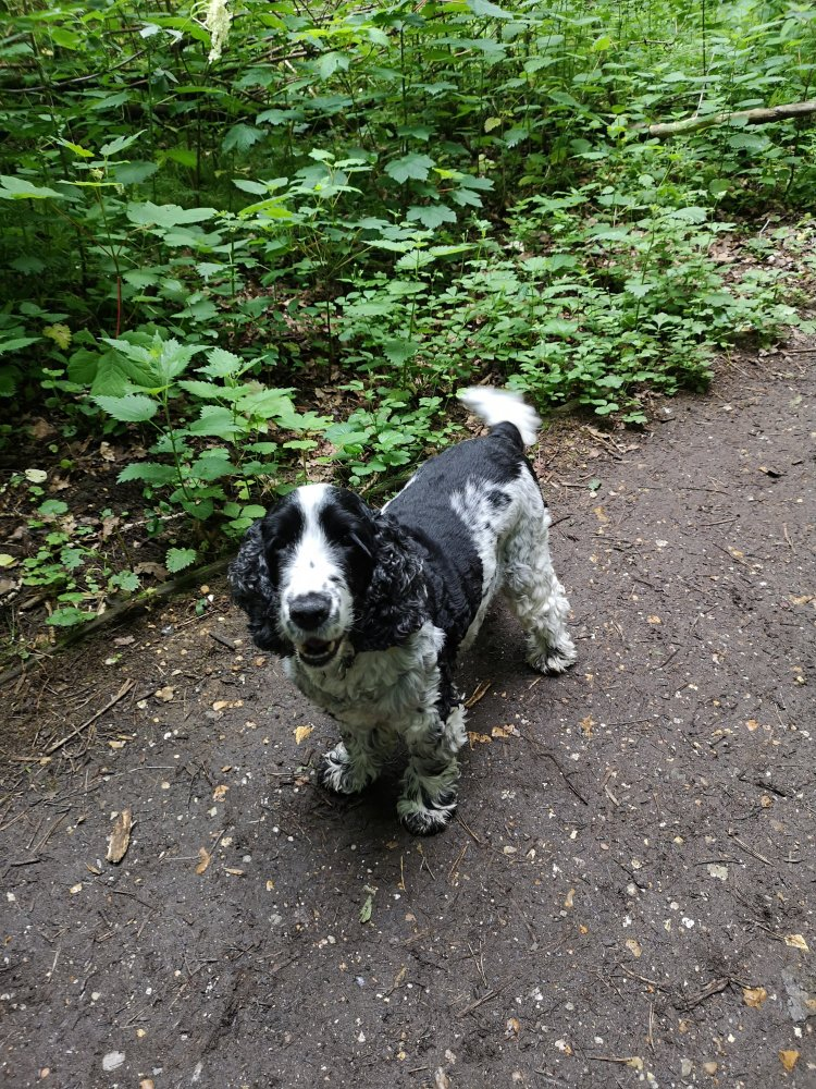Dog socialisation walks in Cambridgeshire