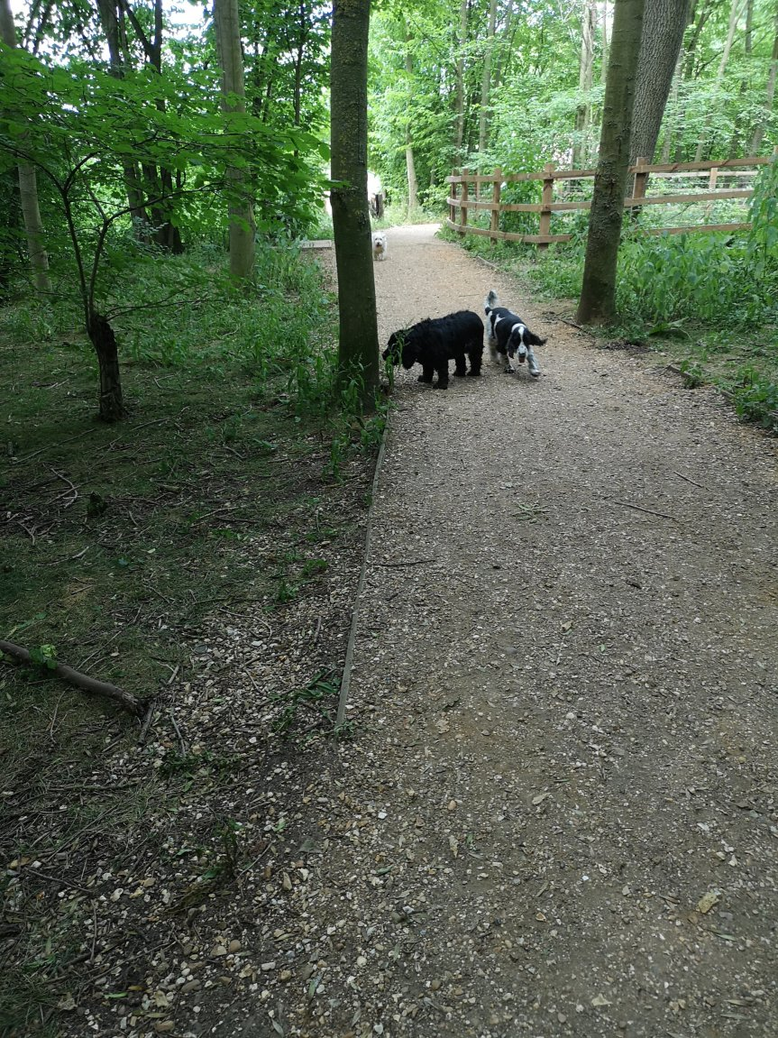 Dog socialisation walks Cambridgeshire