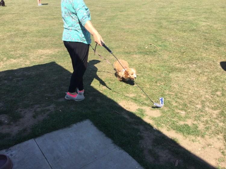 Advanced dog training classes Cambridgeshire