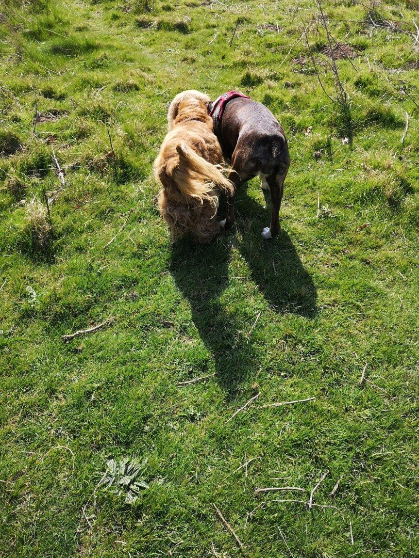 Dog training classes Cambridgeshire