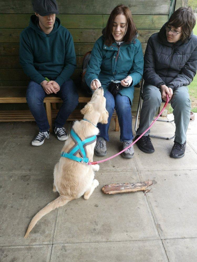 Puppy training Cambridgeshire