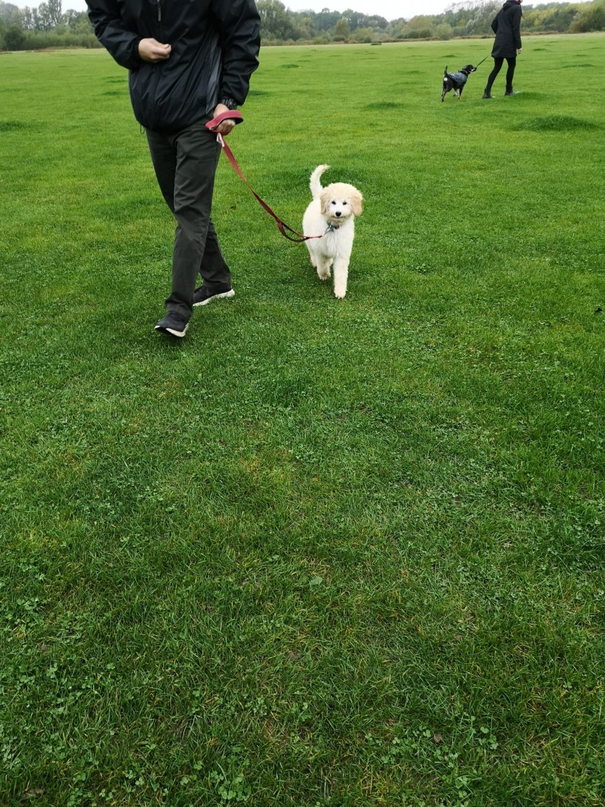 Dog training Huntingdon