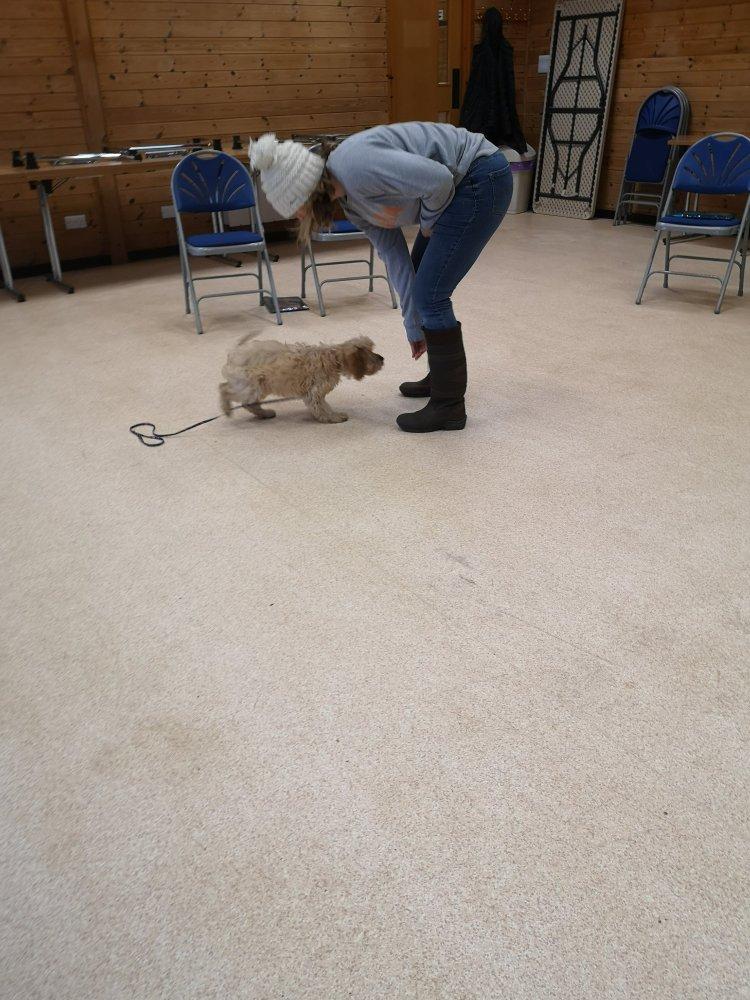 Puppy training classes Huntingdon