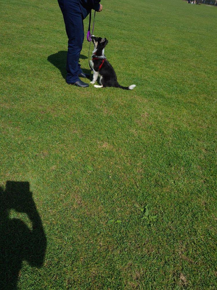 Puppy classes Cambridgeshire