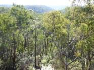 Linden, NSW