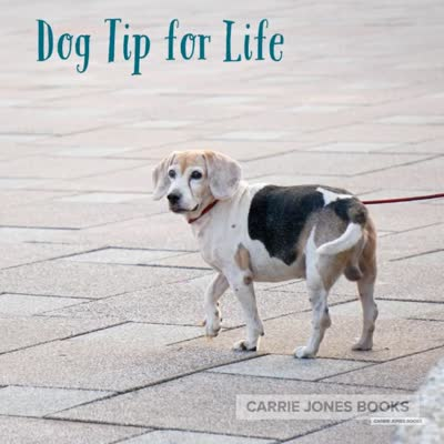 dogs-are-smarter-than-people_std.original-1