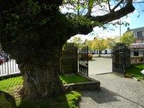 fat tree, gate entrance, Beauly Priory. Image by C. L. Tangenberg