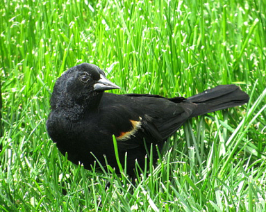 IMG_0820_blackbird_curve2_edits