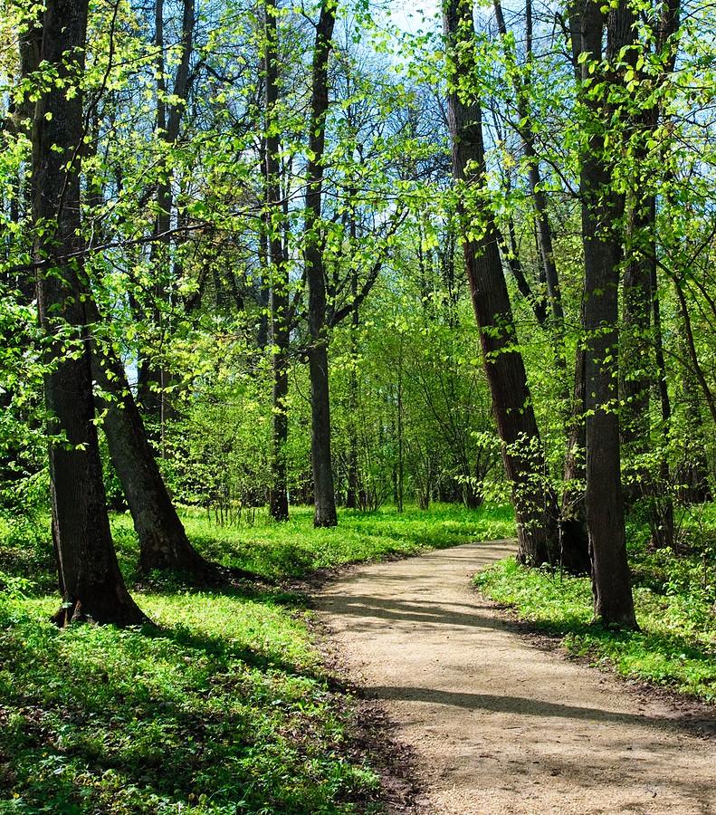 Mediation Walk