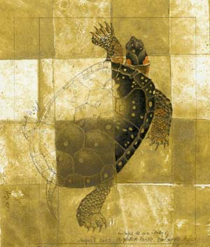 Study of a spotted turtle