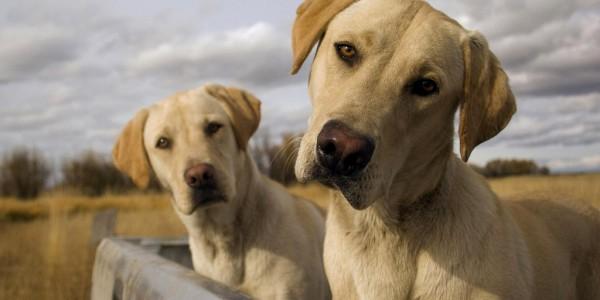 Cachorro na caçamba 1