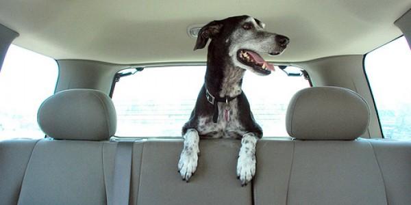 Cachorro no bagagito