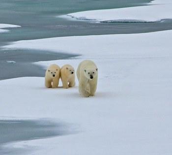 Polar Profits vs Polar Plight – Can a Balance be Found?