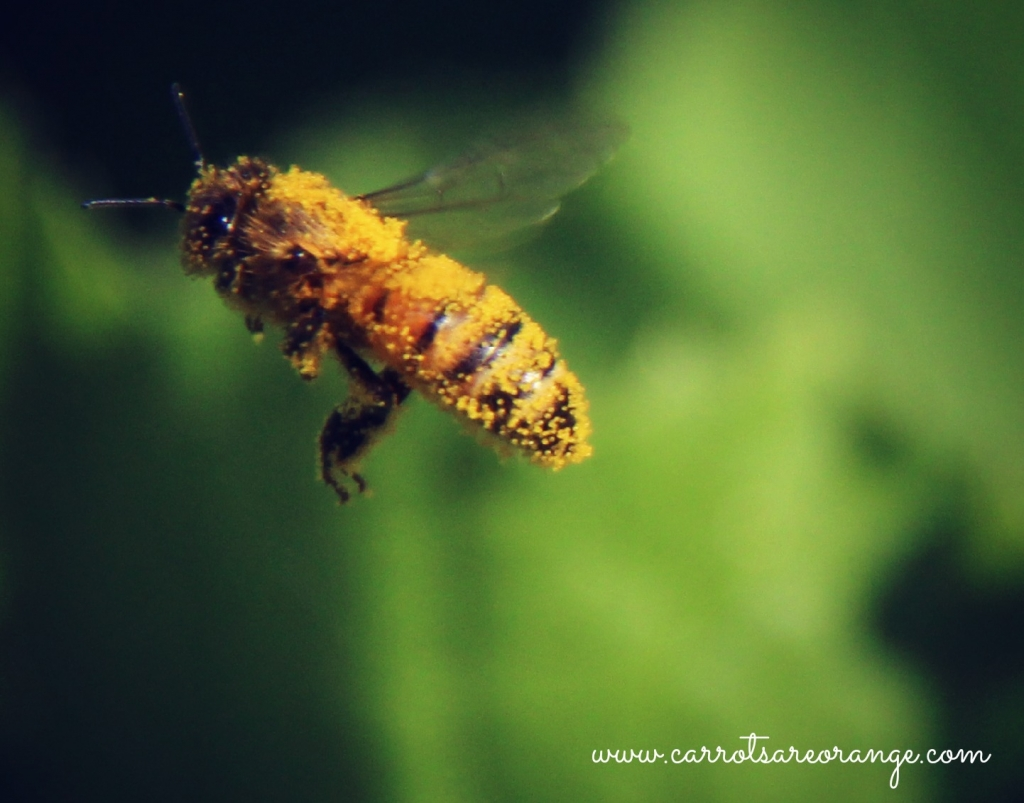 Parts Of The Honey Bee