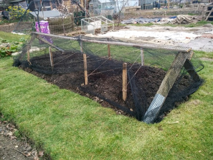 Sowing Outdoor Peas: Kelvedon Wonder