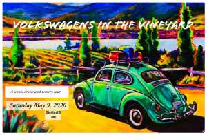 Volkswagens in the Vineyard @ Paso Robles, Califonia | Paso Robles | California | United States