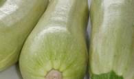 F_A Zucchini - Abobrinha