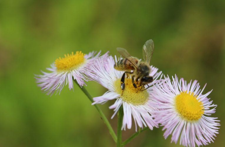 Extension notes: Upcoming educational opportunities for beekeepers