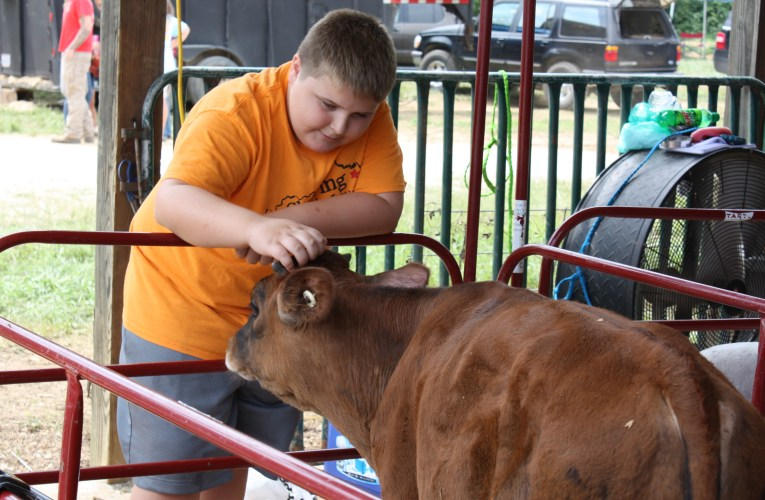 Critters, kids and contests: Fair returns with social distancing and safety plans