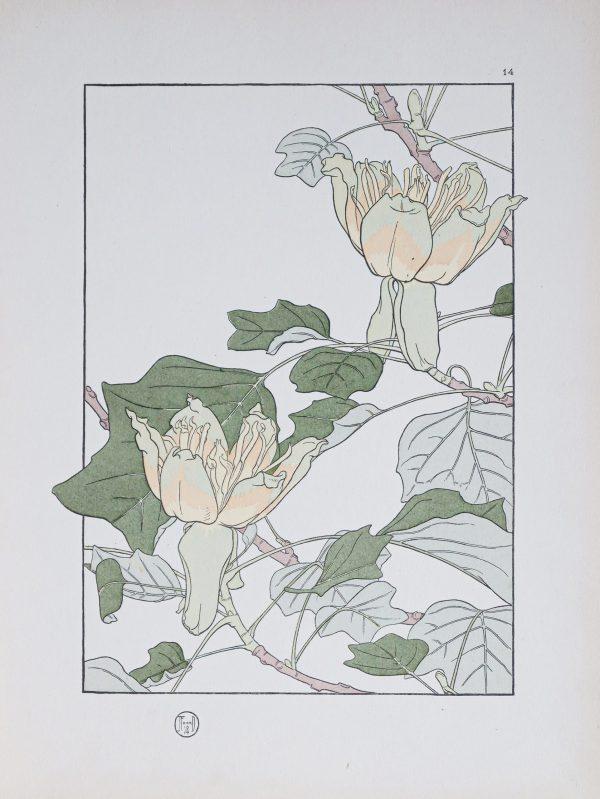 Gravure ancienne - Art Nouveau - Tulipier de Virginie