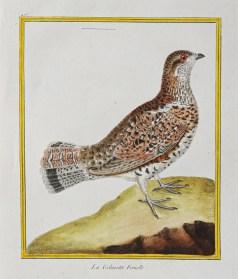 Gravure originale du 18ème siècle