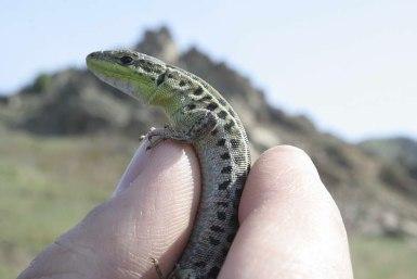 0010_Macin_Broasca Testoasa si reptile_2011_01_006